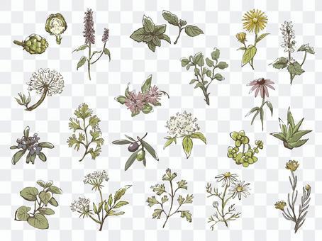 Handwritten herbs assortment 1