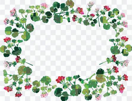 天竺葵框架
