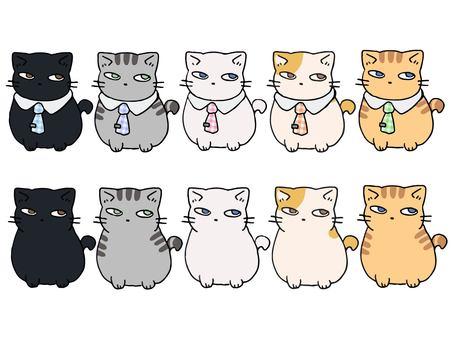 一組可愛的公司貓和普通貓