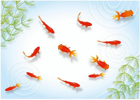 金魚舀金魚
