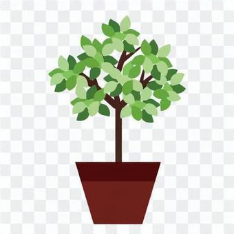 葉子植物的形象
