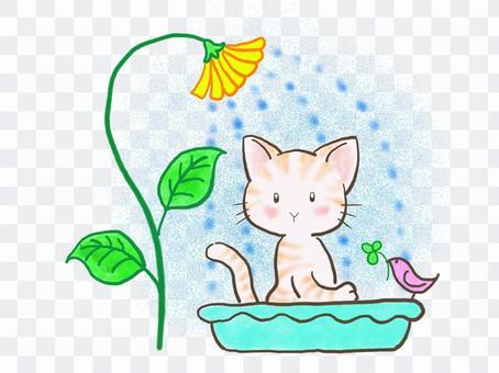 水浴びネコ4