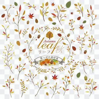 Leaf / leaf / fallen leaves / autumn stock set