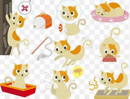 Pet 26 (Cat set 01)