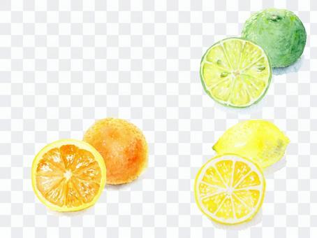 Orange lemon ruffled with watercolor