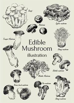 食用菌的插圖