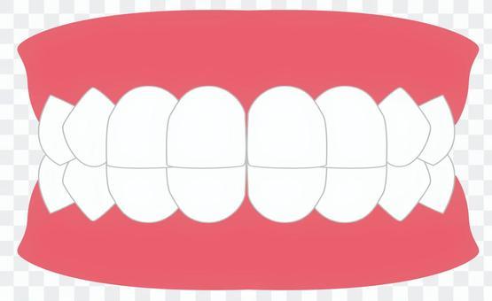 牙齒牙列前牙
