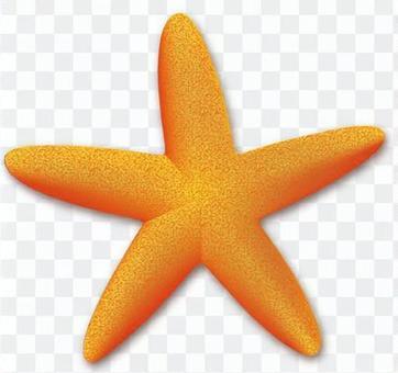 Starfish - 01