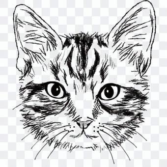 しましま猫の顔/白黒手描きイラスト・絵