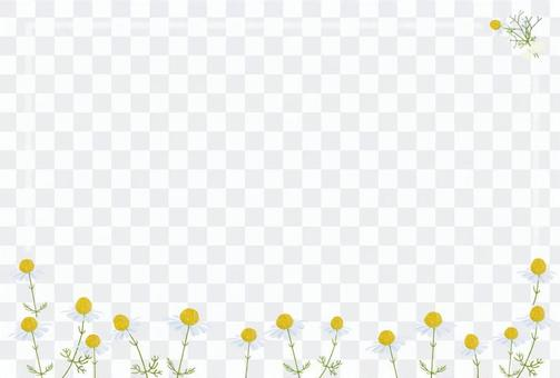 洋甘菊可愛明信片