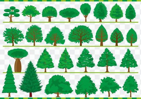 樹木001