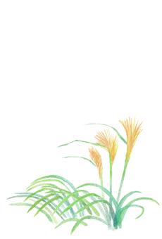 계절의 엽서 [가을 억새]