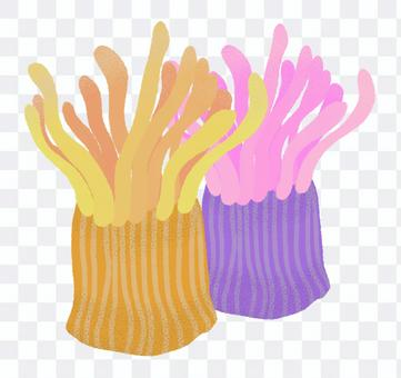 Illustration of sea anemone