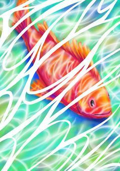 熱帶海水魚