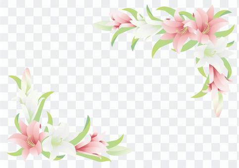 Key frame _ Lily 3