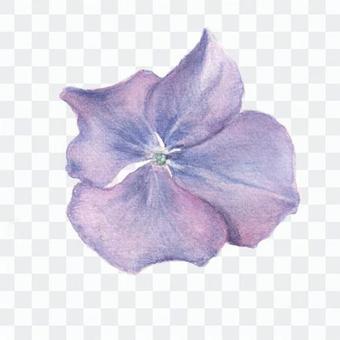 Hana 15 - Blue Hydrangea