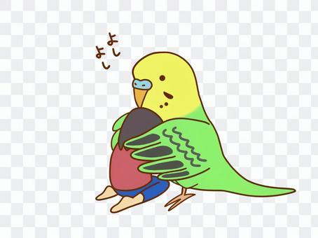 安慰長尾小鸚鵡