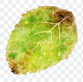 一片葉子品嚐葉子的水彩繪畫