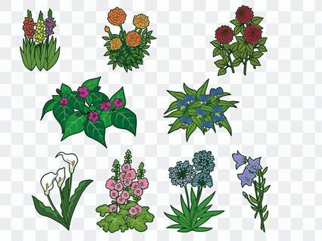 夏の花セット2