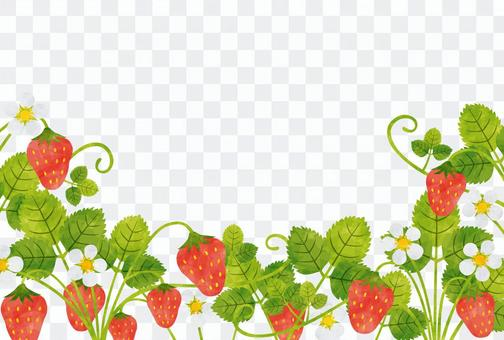 框架/草莓
