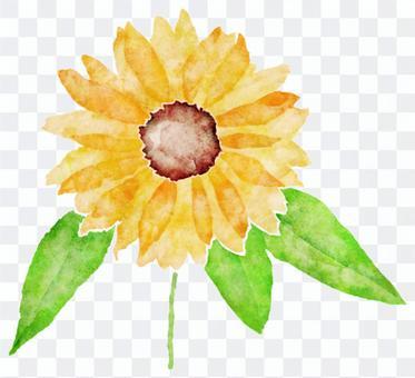 向日葵水彩圖片
