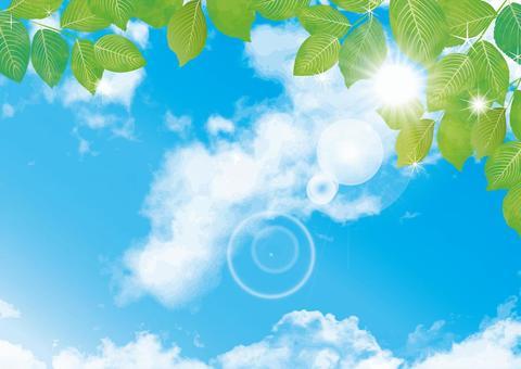 背景材料藍天新鮮的綠色Wakaba壁紙春天初夏五月七月
