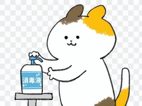 手を消毒する三毛猫