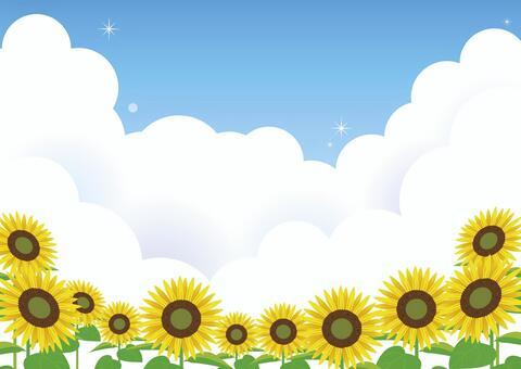 藍藍的天空向日葵