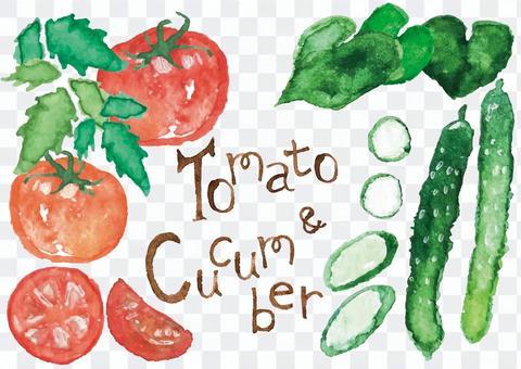 《水彩風格》番茄和黃瓜