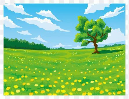 たんぽぽが咲く草原