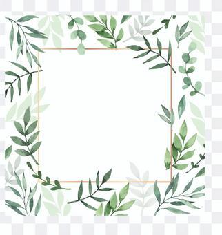 桉樹草本框架