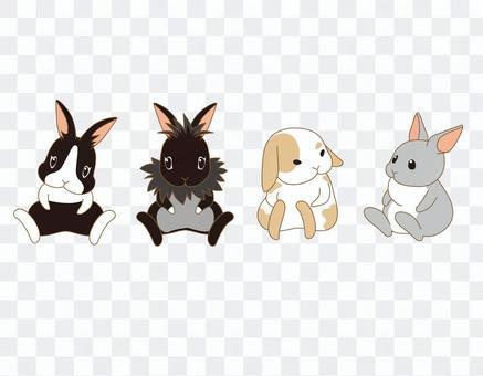 動物04_兔子