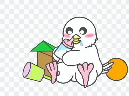 爪哇麻雀小雞寶寶