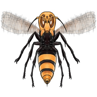 Giant hornet or giant bee monster flapping its wings