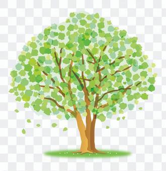 숲의 녹색 나무