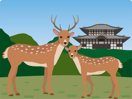 與奈良公園的鹿東大寺