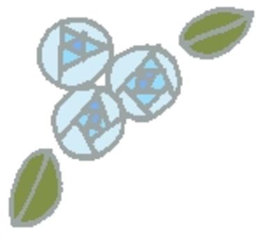 玫瑰②藍色(氣球3)