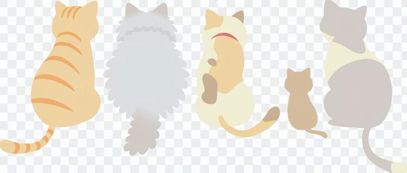 Cat _ Backwards variety