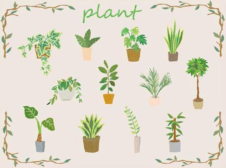植物 観葉植物 多肉