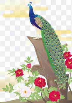 Peacock Peony 図 _ 彩云