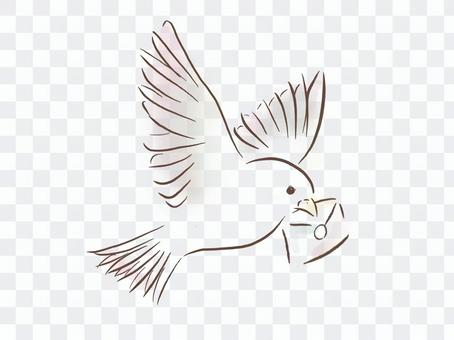 Dove carrying a letter