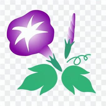 Purple morning glory illustration