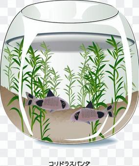 水族館Corydoras熊貓魚