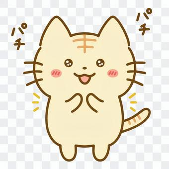 令人讚嘆的虎斑貓