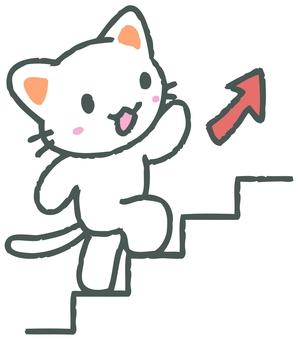 上樓梯的貓