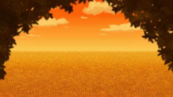 晚上的陰影和草地景觀背景16:9