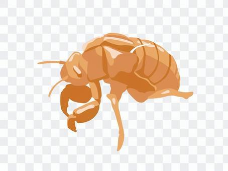 Animals_insects_繭殼_沒有線條