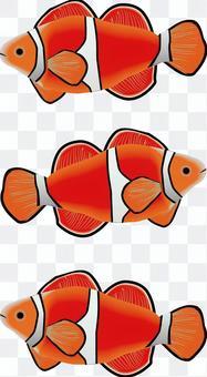 小丑魚鑑賞魚養魚寵物