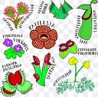 食肉植物集