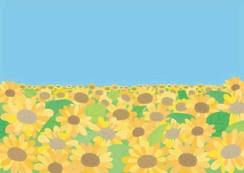 [Vector background] Sunflower field